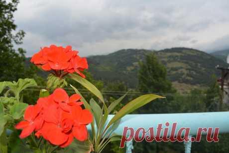 Priceline.com: Гостевой дом Sweet Home , Дилижан, Армения - 82 Отзывы гостей . Забронируйте отель прямо сейчас!