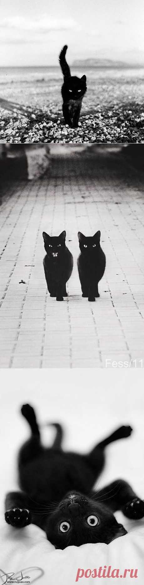 Жил да был черный кот за углом...