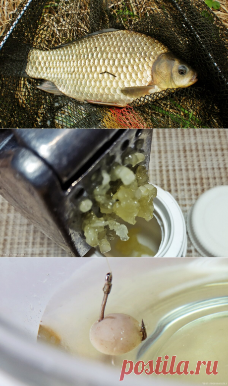 Как сделать чесночный дип для карася и прочей рыбы. Пожалуй, самый простой способ