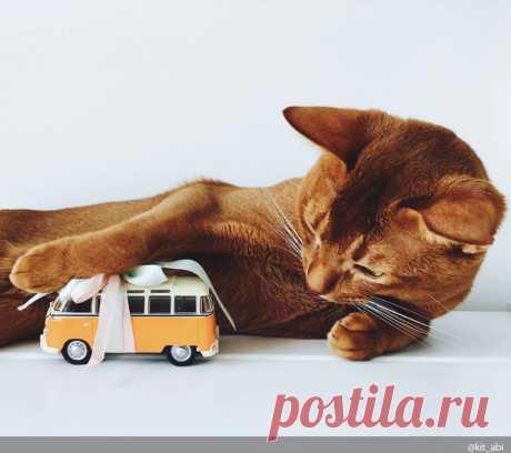 10 best aphorisms about cats
