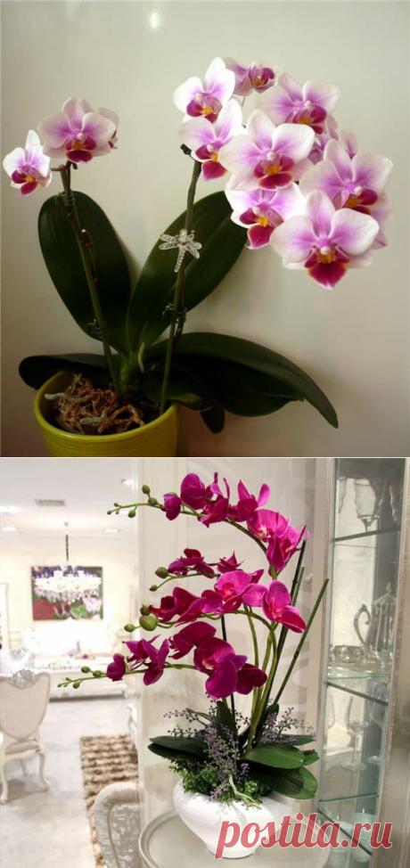 Орхидея по фэн шуй: значение и тайный смысл