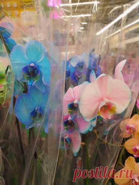 Не покупаю крашеные орхидеи и суккуленты: чем их красят и что с ними будет потом? | Антон - цветочник | Яндекс Дзен