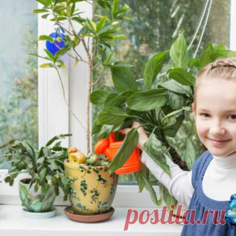 12 best houseplants for a nursery. We choose the correct and safe plants