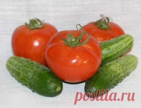 Можно ли в одной теплице выращивать огурцы и помидоры? Личный опыт. | Дачник | Яндекс Дзен