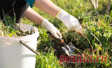 The guide on weeds: photo, types, names, fight measures | Soil and fertility (Огород.ru)