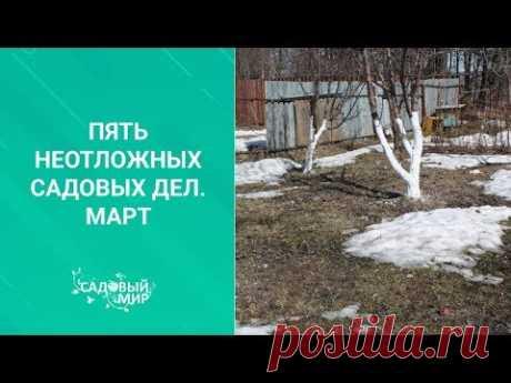 Пять неотложных садовых дел в марте