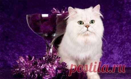 Имена кошек, которые приносят деньги, счастье и удачу в дом! Всем кошатникам знать обязательно!