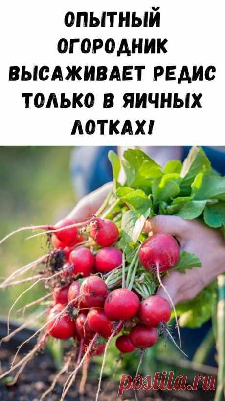 Опытный огородник высаживает редис только в яичных лотках! - Интересный блог