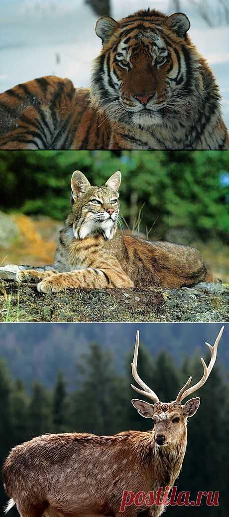 Животный мир | НАУКА И ЖИЗНЬ