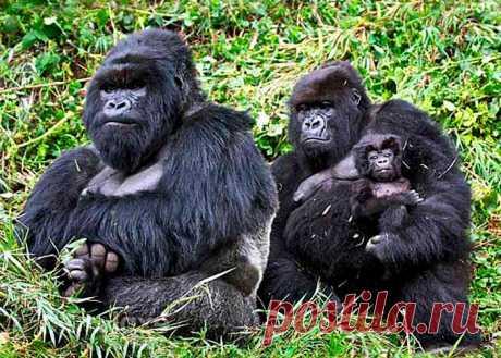 флора и фауна танзании– Google Поиск