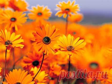 мне с детства нравились полевые цветы