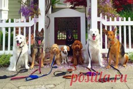 Житель Калифорнии, работающий выгульщиком собак, прославился благодаря фотографиям своих подопечных, демонстрирующих идеальную выдержку
