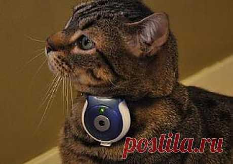 Камера-ошейник, превращает кошку в шпиона поневоле.