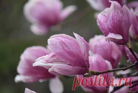 В сердце каждого из нас живет весна – только дайте распуститься этим прекрасным и чистым цветам нежности, веры и любви…