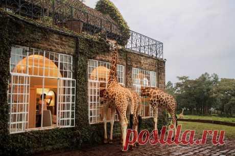 Где можно позавтракать с жирафами