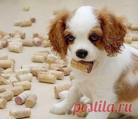 просил мягкую игрушку )))