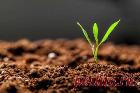 Стимуляторы и регуляторы роста растений для рассады