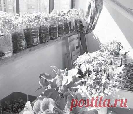 Упрощенный способ выращивания рассады: