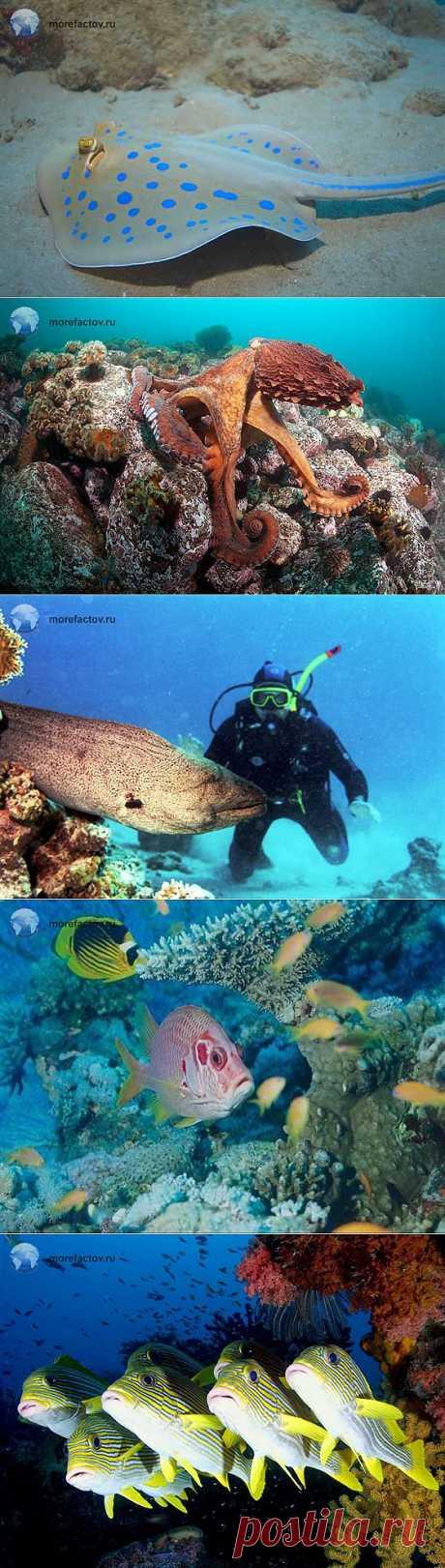 Красное море. Кораллы и рыбы Красного моря - Море Фактов