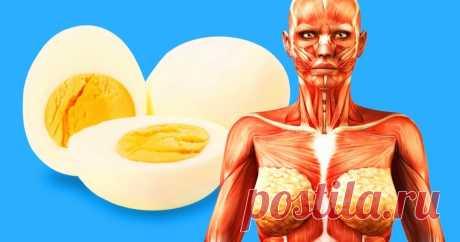 9вещей, которые произойдут свашим телом, если есть по2яйца каждый день