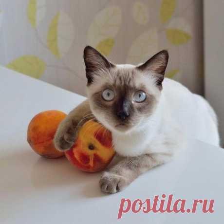 Девочка с персиками)