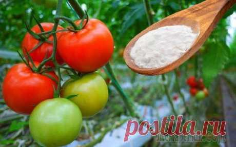 10 способов применения пищевой соды в саду и огороде Обычная сода не только используется для мытья посуды и отбеливания зубов, применяется в выпечке и при изжоге. Порошок эффективен при болезнях растений, борется с сорняками и служит удобрением. Веществ...