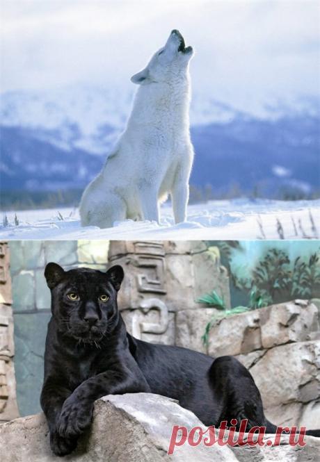 Самые красивые животные - Братья наши меньшие - ГОРНИЦА -блоги, форум, новости, общение