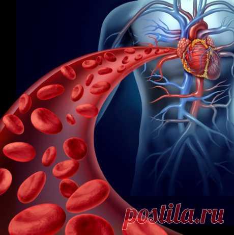 Как разжижать кровь в организме Если кровоток в сосудах медленный, происходит кислородное голодание тканей организма. Также так развиваются риски образования тромбов. Поэтому следует включить в рацион продукты, которые разжижают кровь. Предлагаем вашему вниманию целительные рецепты домашних снадобий.