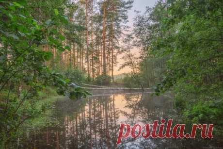 Уединенное местечко на озере Саврасово, Владимирская область. Автор фото: Максим Сухов.