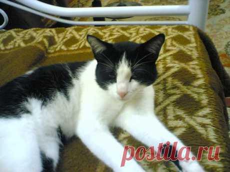 К чему снится Кот | Астрору