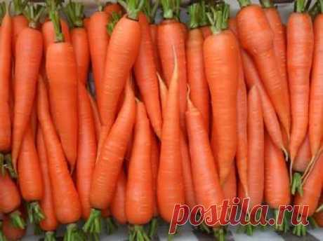 Морковь, посадка и уход в открытом грунте