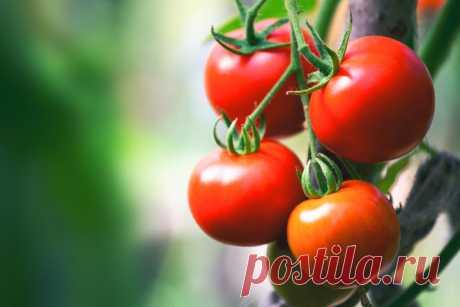 GISMETEO.RU: Ученые заявляют: не храните помидоры в холодильнике - 5 июня 2019 | События | Новости погоды.