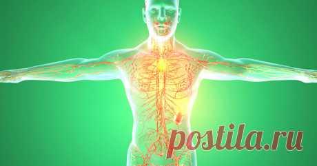 """Как разогнать лимфу? Самые действенные способы! - Женский журнал """"Красота и здоровье"""" ЛИМФАТИЧЕСКАЯ система призвана очищать организм. Кровь транспортирует к органам и тканям необходимый кислород и питательные вещества. А лимфа уносит всё отработанное и токсичное в выделительную систему, плюс уничтожает бактерии, инородные тела. Если спросить человека, какая система в нашем организме самая важная, то большинство ответит: «Кровеносная»! Возможно, кто-то назовет еще нервную"""