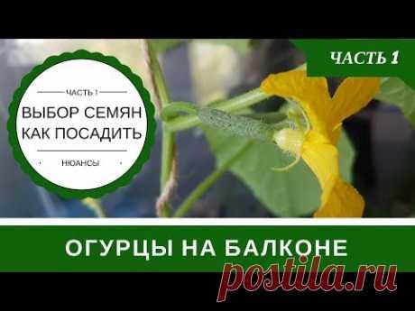 Огурцы На Балконе Технология Выращивания В Бутылке: Часть 1