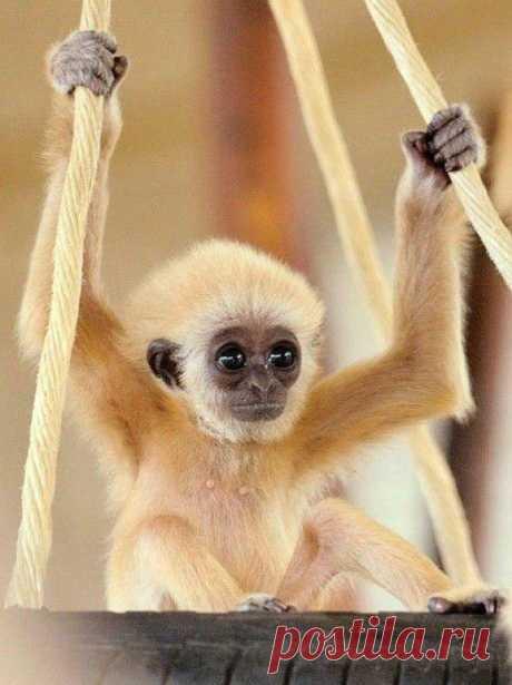 Трогательная обезьянка