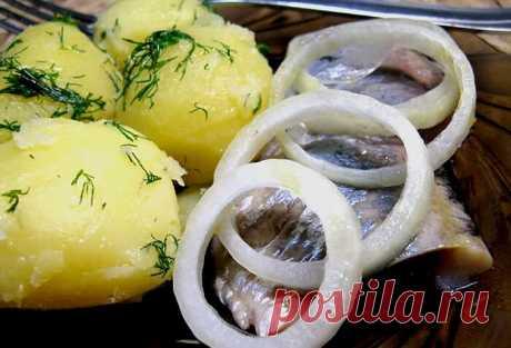 Почему моя вареная картошка, вкуснее, чем у других. Секрет - в заправке | Отчаянная Домохозяйка | Яндекс Дзен