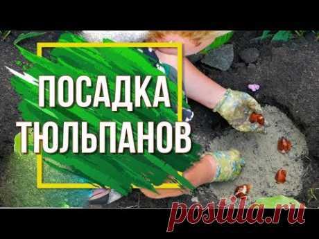 Как посадить Тюльпаны ✔️ Сажаем Луковичные в Саду