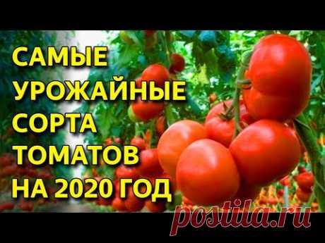 САМЫЕ УРОЖАЙНЫЕ СОРТА ТОМАТОВ! ЛУЧШИЕ СОРТА ТОМАТОВ 2020 года!