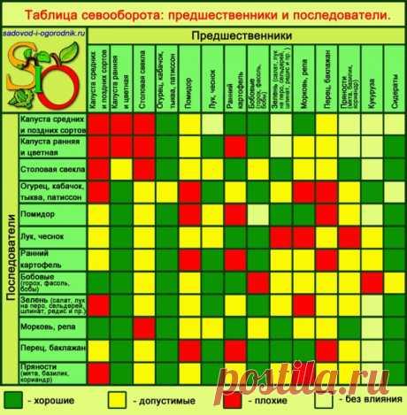Севооборот овощных культур - таблица, предшественники овощей, организация чередования на даче