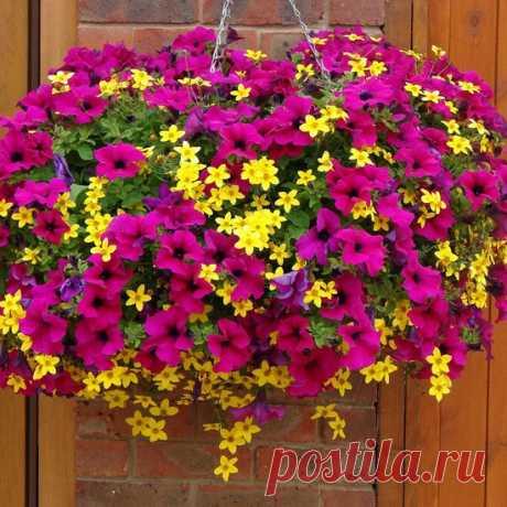Цветы на даче, цветущие всё лето | LS