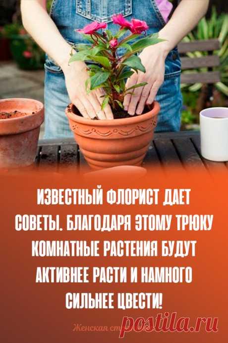 Известный флорист дает советы. Благодаря этому трюку комнатные растения будут активнее расти и намного сильнее цвести!
