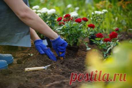 Оформление клумбы с розами — оригинальный цветник своими руками | Огородные шпаргалки | Яндекс Дзен