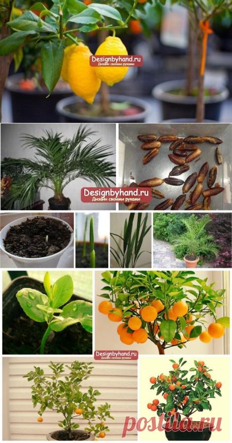 Какие растения можно вырастить дома из косточки? ТОП - 4 самых популярных