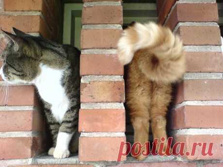 Два котика или один?!