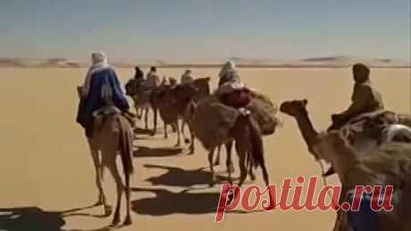 ВОЗВРАЩАЙСЯ. - (Алжирская народная песня) - АККОРД.