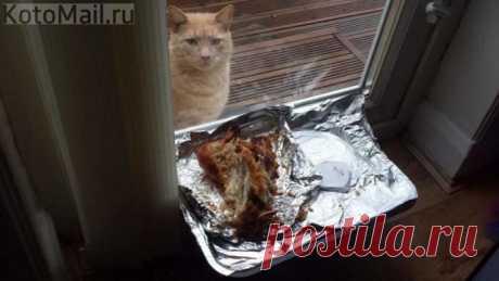 Котик-печалька