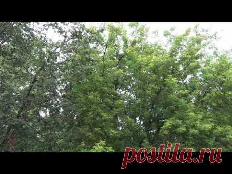 Звуки природы после дождя для отдыха