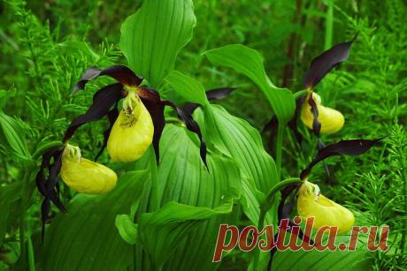 В царстве орхидей: полезные советы по уходу | Постила | Яндекс Дзен