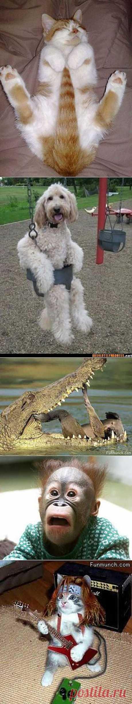 Смешные фотографии животных Page 6: смешные фото животных | Обои Plus. Самые забавные животные 2012 (Часть 1) | Фото для всего мира. Прикольные картинки животных - 55 фотографий. Веселые картинки животного.