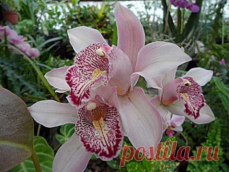 Орхидеи для начинающих 8 простых советов   ЖЕНСКИЙ МИР